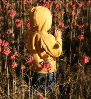 Resultado de imagem para flores mortas